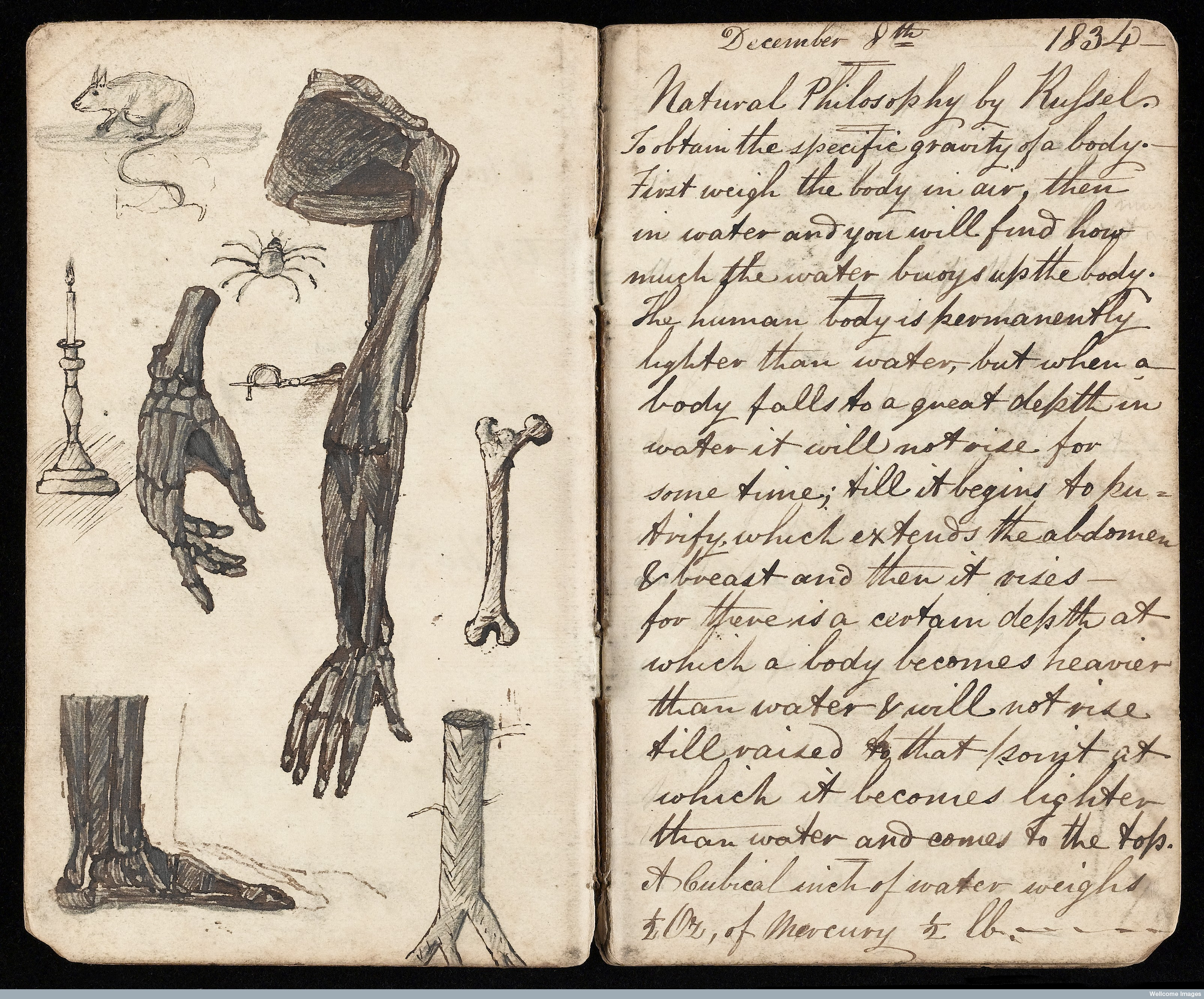 BH History Wellcome Library Anatomy lecture notes L0041422.jpg